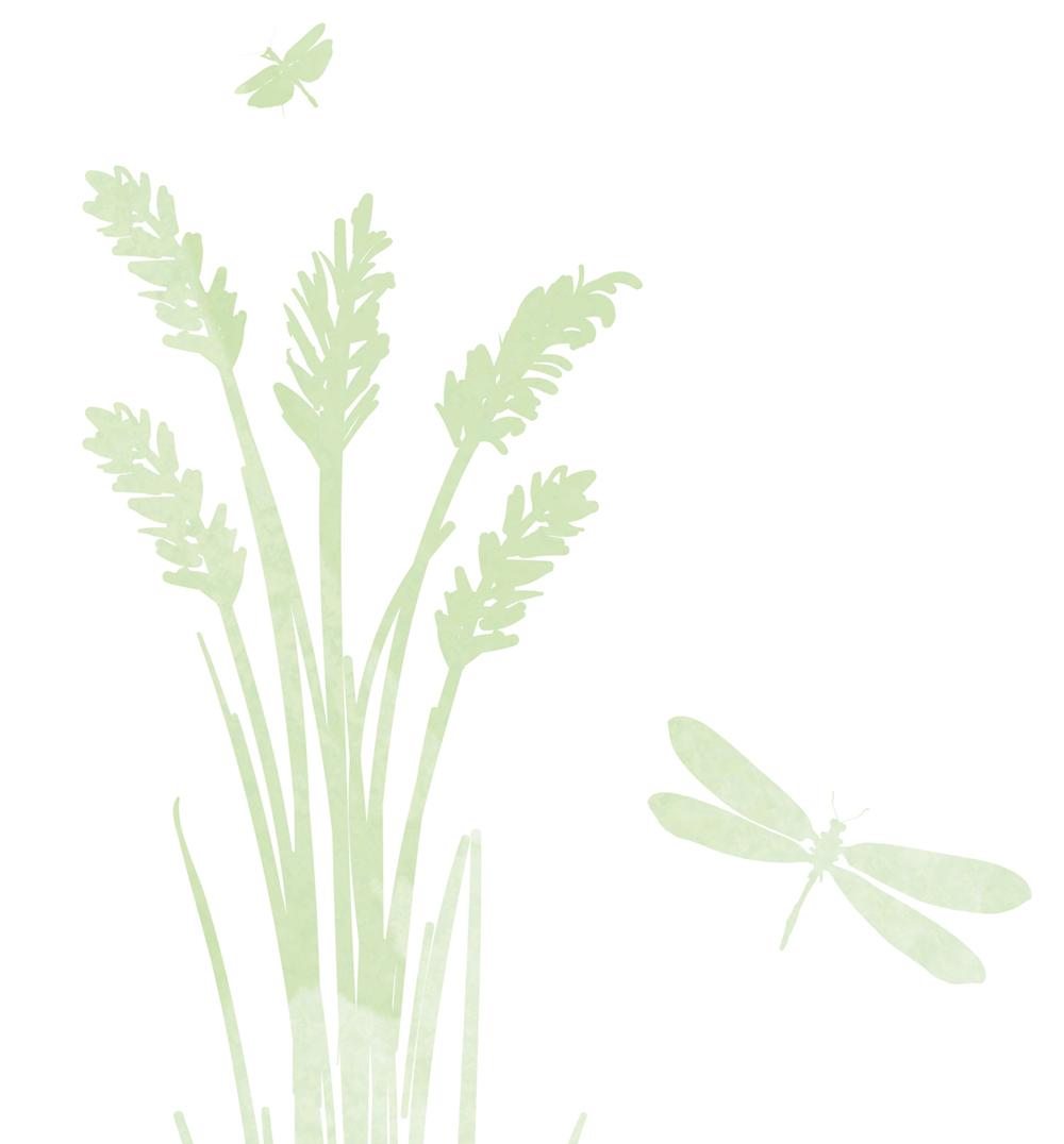 Wainsford reeds