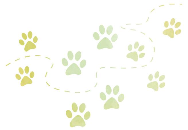 Wainsford dog paws