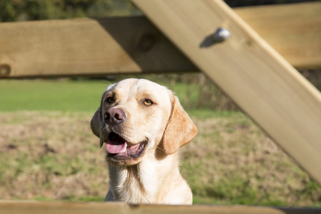 Wainsford Dog Friendly Cottages
