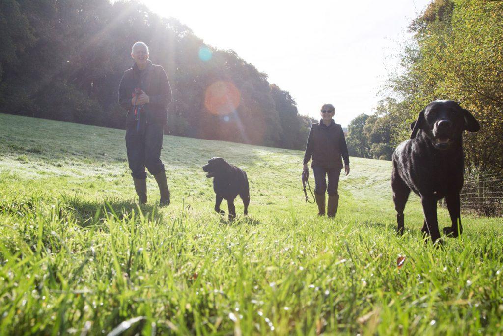 Wainsford Riverside Cottages dog walking