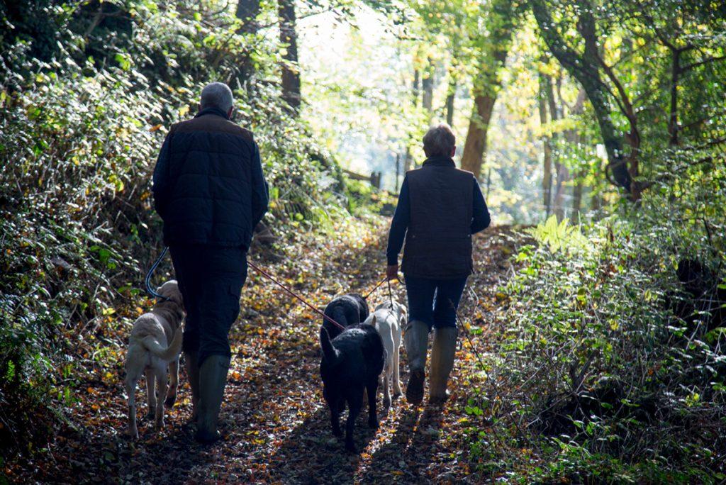 Wainsford Dog Friendly Holidays