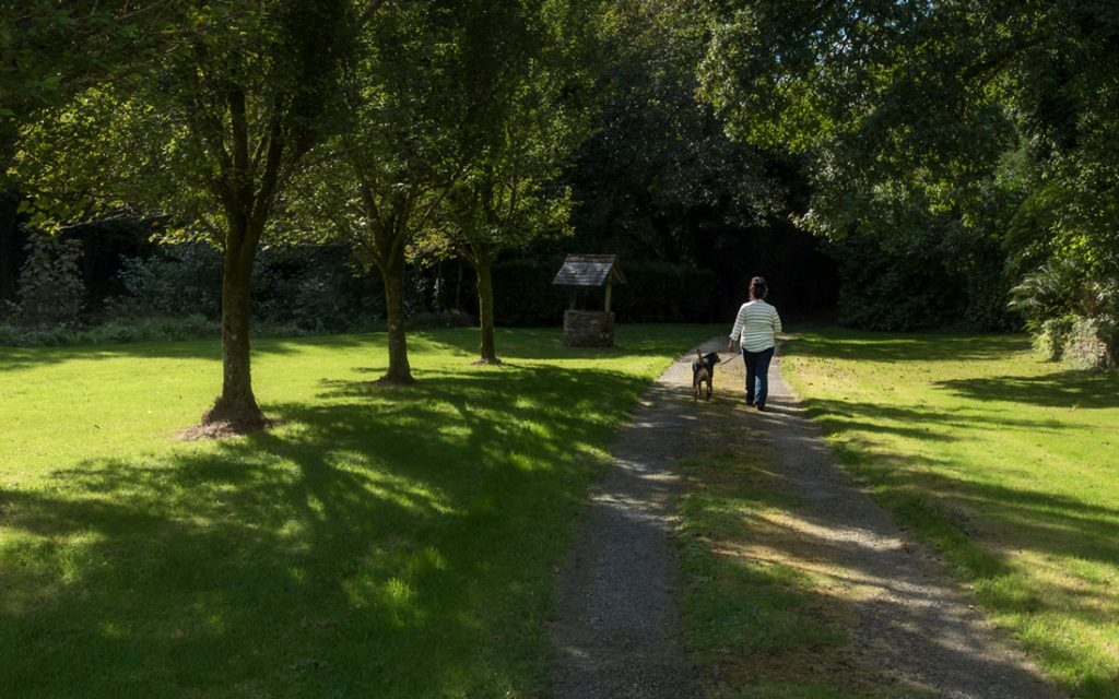 Wainsford dog walking